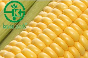 Kaveri Seed Company