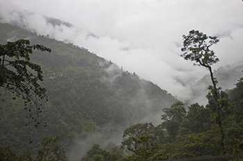 Rain forest in mountains